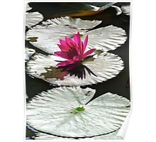 LILY FLOWER LAKE Poster