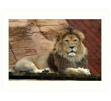 African Lion, laying proudly Art Print