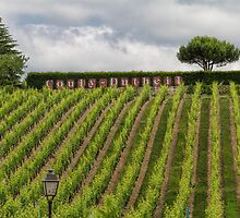 Couly-Dutheil Winery, Chinon, France by Elaine Teague
