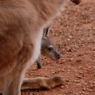 Young joey takes a look at the world by Duncan Drummond