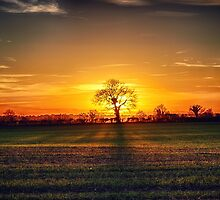 The sun and the tree by Vicki Field