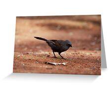 bird on 35mm Greeting Card