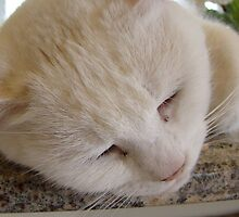 DeeDee The Cat Sleeps by Michael Williams