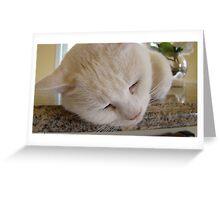 DeeDee The Cat Sleeps Greeting Card