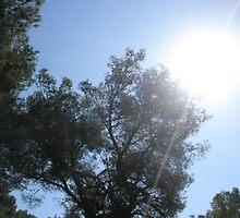 Summers Sun by Garylee