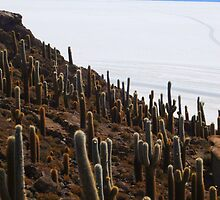 Giant Cacti, Salar Uyuni by Honor Kyne