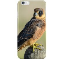 Falco. iPhone Case/Skin