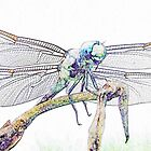 Dragonfly  by Marcella Babineaux