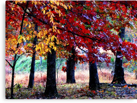 Simple Forest Scene by NatureGreeting Cards ©ccwri