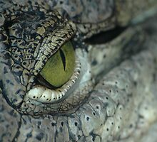 Aligator eye by grugster