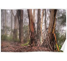 In The Forrest - Mount Wilson NSW Australia - The HDR Experience Poster