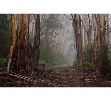 The Journey - Mount Wilson NSW Australia - The HDR Experience Photographic Print