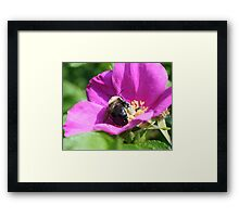 Double Duty Bees Framed Print