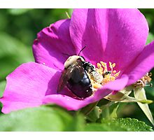 Double Duty Bees Photographic Print