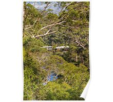 Beedelup National Park, Nr. Pemberton, Western Australia #2 Poster