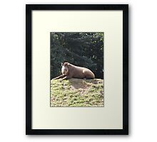 Tapir To The Top and Smile Framed Print