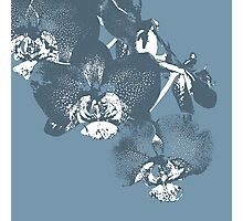 Homescape - wedgewood blue orchid  Photographic Print