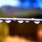 Raindrop by Redneck