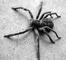 _Spider_ 2 by xTRIGx