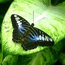 Butterfly and green leaves by ienemien