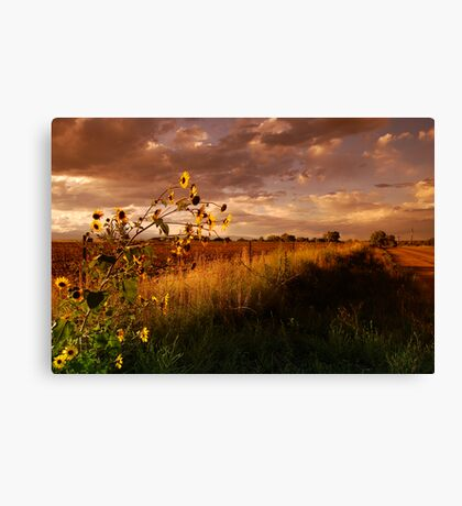 Colorado Farm Land III Canvas Print