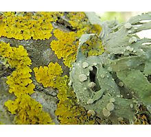 """Lichen this already"" Photographic Print"