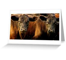 Martyn's Cattle Greeting Card