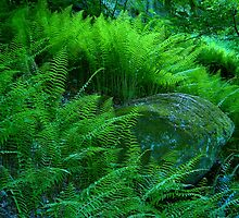 Where The Wild Ferns Grow by NatureGreeting Cards ©ccwri
