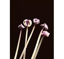 Pollen Stalks Photographic Print