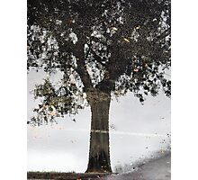 Reflection in Water On Asphalt Photographic Print