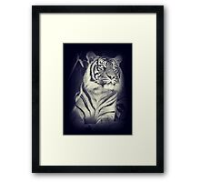 Black & White Sumatran Tiger Framed Print