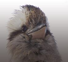 The Laughing Kookaburra - An Aussie Icon!! by Marilyn Harris
