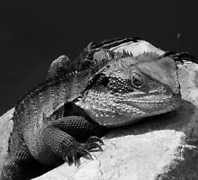 Water Dragon in Black & White by Samantha  Goode