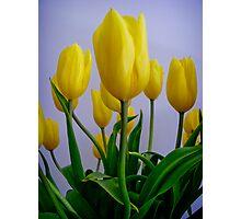 """Yellow Tulips"" Photographic Print"