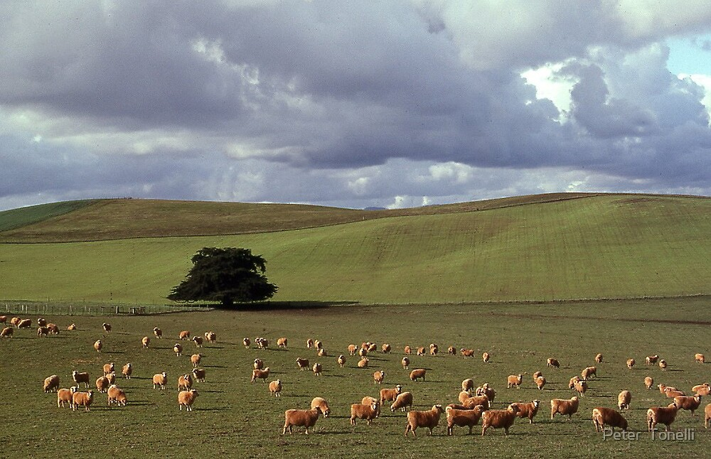 NW farmlands - Tasmania by Peter  Tonelli