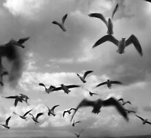 Fly Away by werxj