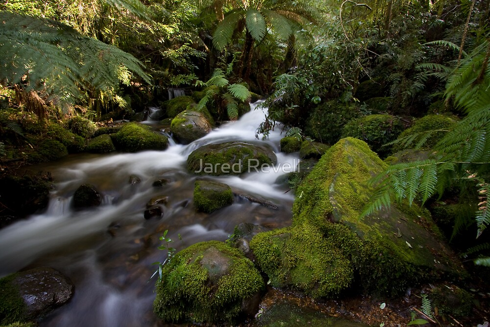 A Glimpse of Sun at the Rainforest Gallery by Jared Revell