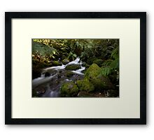 A Glimpse of Sun at the Rainforest Gallery Framed Print