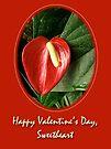 Valentine's Day Red Anthurium by MotherNature