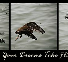 Let Your Dreams Take Flight by Alison Cornford-Matheson