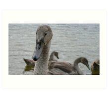 ..... The Grey Swan........ Art Print