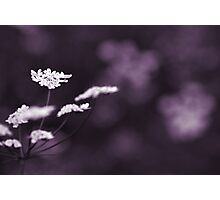 white on violet  Photographic Print