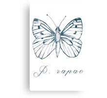 Pieridae Rapae Canvas Print