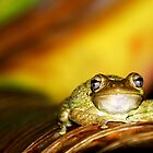Buddha Frog by JKKimball