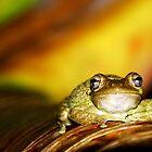 Buddha Frog by JKKimball