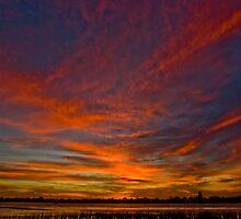 Southern Colours by Matt Harvey