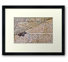 Zen Leaf Framed Print