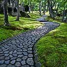 Path Through Moss by eyeshoot