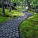 Path Through Moss by eyeshoot