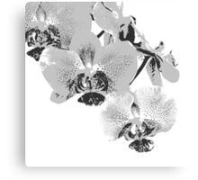 Homescape - grey and white orchid  Canvas Print